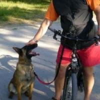 Fahrradfahren mit Hunden