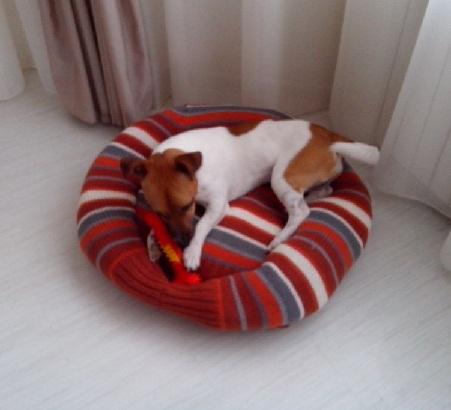 Hund pinkelt pltzlich auf den Teppich - DogForumde das
